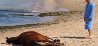 Rai Uno il Commissario Montalbano anticipazione puntata 10 aprile La pista di sabbia